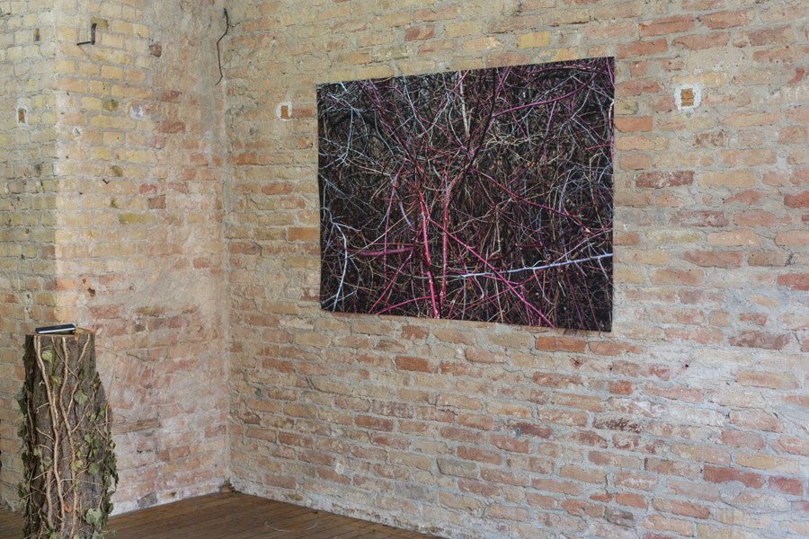 Installation View PINEAL EYE, EXP12